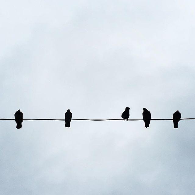【ぐもにん2160】丁寧に。まっすぐに。今日も「笑顔の選択」と。#goodmorning #sky #birds #photo
