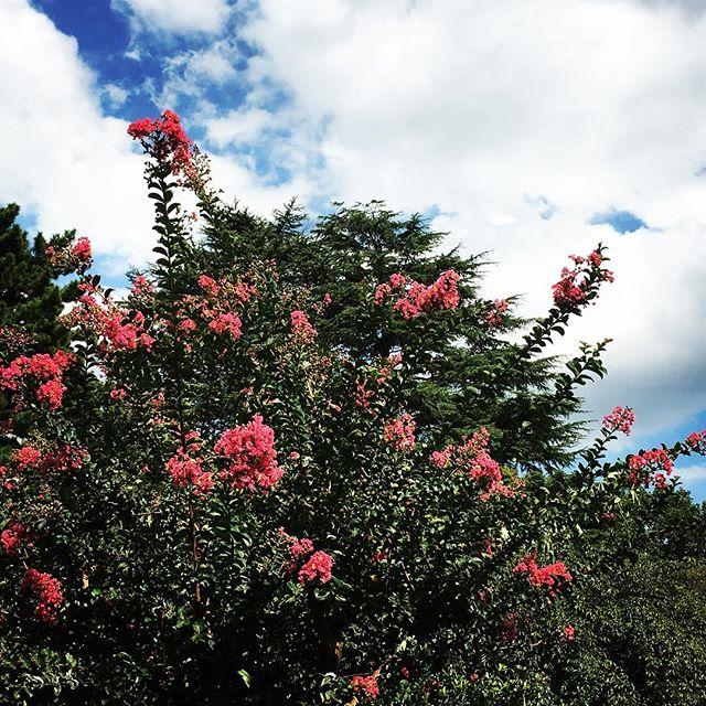 【ぐもにん2159】自分の塩梅で進む。今日も「笑顔の選択」と。#goodmorning #flowers #sky #photo