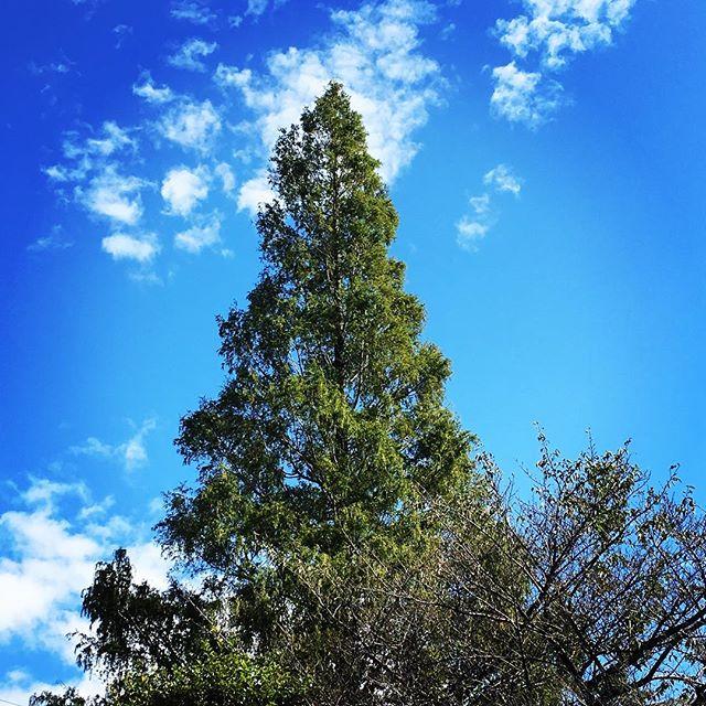 【ぐもにん2186】存在の、想いの純度を高めていく。今日も「笑顔の選択」と。#goodmorning #beautifulsky #bluesky #tree