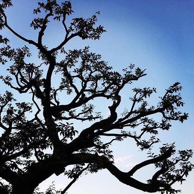 【ぐもにん2190】自然の意図は美しい。私たちも自然の意図の中にある。それぞれの美しさ。今日も「笑顔の選択」と。#goodmorning #beautifulsky #sunset #shadow #tree