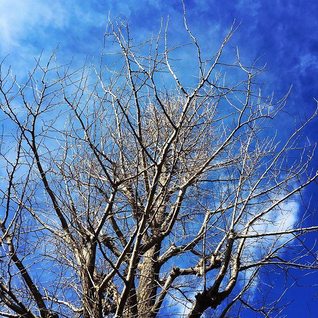 【ぐもにん2306】関わるもの全てがエネルギー。感謝と信頼で自分を満たす。今日も「笑顔の選択」と。#goodmorning #beautifulsky #bluesky #trees