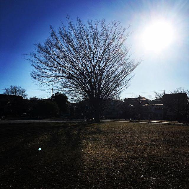 【ぐもにん2310】動いてしまえば動いちゃう面白さ。今日も「笑顔の選択」と。#goodmorning #beautifulsky #sunshine #bluesky #tree