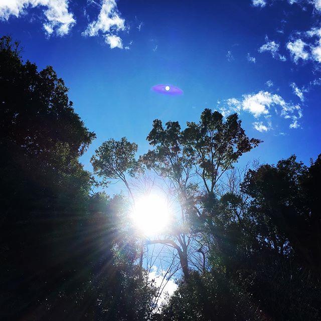 【ぐもにん2303】ご機嫌が循環力を高める。今日も「笑顔の選択」と。#goodmorning #beautifulsky #sunlight #trees #blue