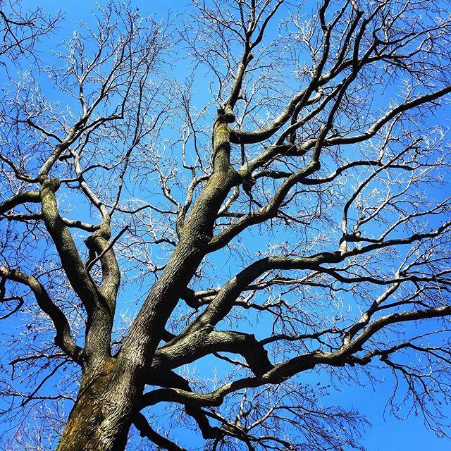 【ぐもにん2314】大切なものを育てていく。今日も「笑顔の選択」と。#goodmorning #beautifulsky #bluesky #tree
