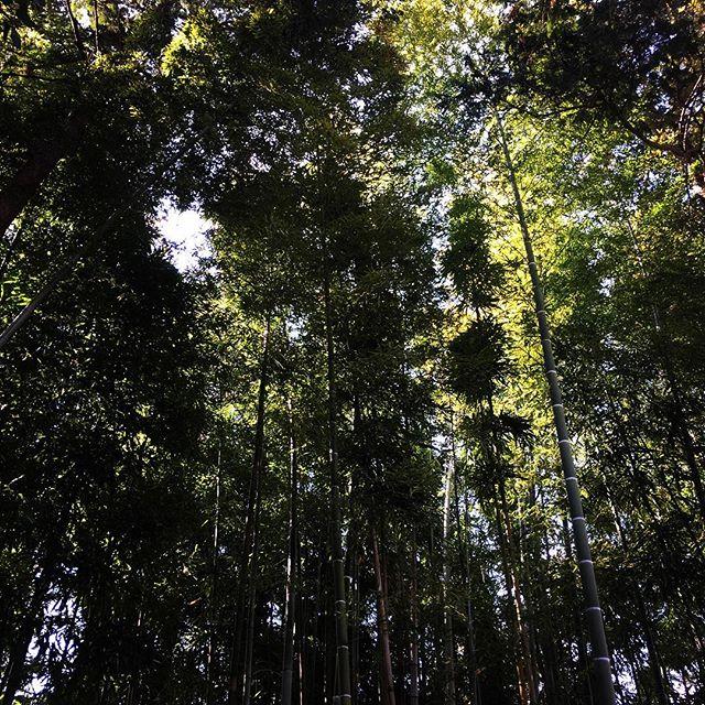 【ぐもにん2321】背筋を伸ばして深呼吸して踏みしめて全てはそこから始めよう。今日も「笑顔の選択」と。#goodmorning #bamboo #green
