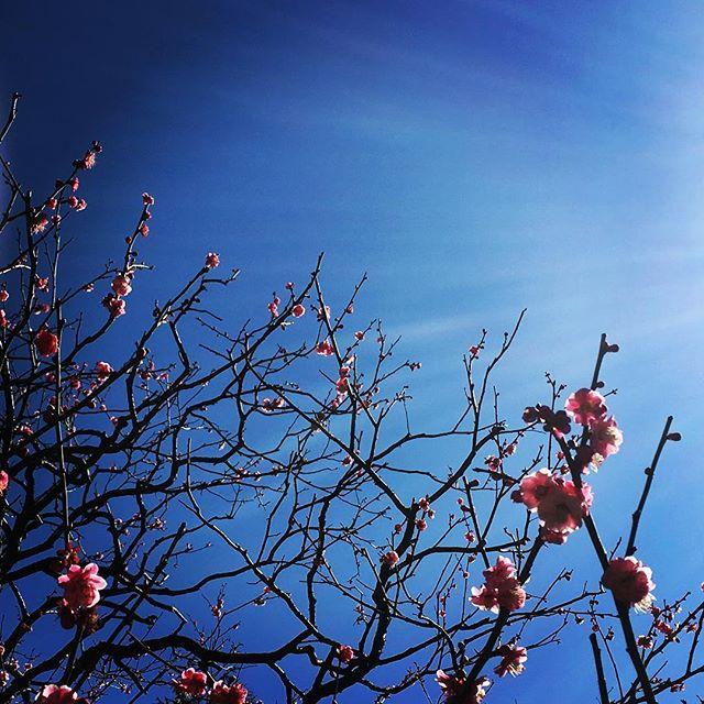 【ぐもにん2315】大丈夫。行くべき道をわかって歩んで進んでる。今日も「笑顔の選択」と。#goodmorning #beautifulsky #flowers #blue #pink