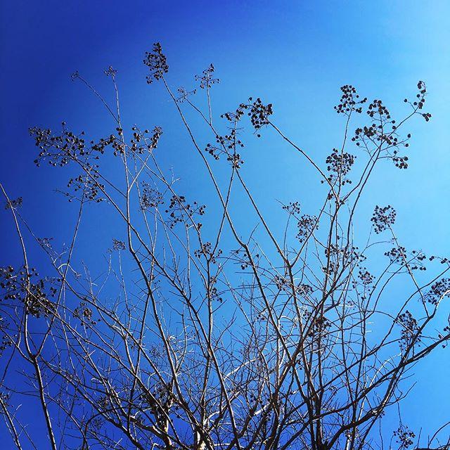 【ぐもにん2324】自分の想いが現実を作る。今日も「笑顔の選択」と。#goodmorning #bluesky #beautifulsky #blue