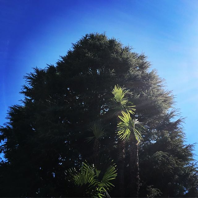 【ぐもにん2323】ゴールと思ったところも1つの通過点。今日も「笑顔の選択」と。#goodmorning #beautifulsky #bluesky #tree #blue #green