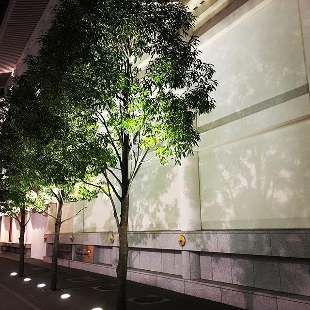 【ぐもにん2333】大切なものと捨てるもの。決めるのは自分自身。今日も「笑顔の選択」と。#goodmorning #trees #ginza #tokyo