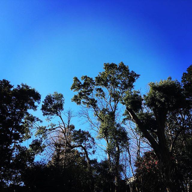 【ぐもにん2331】移りゆく季節と時間を感じ楽しむ。今日も「笑顔の選択」と。#goodmorning #beautifulsky #trees #bluesky
