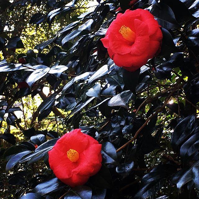 【ぐもにん2341】本当に大切なもの。見つめてみよう。今日も「笑顔の選択」と。#goodmorning #tree #flowers #red