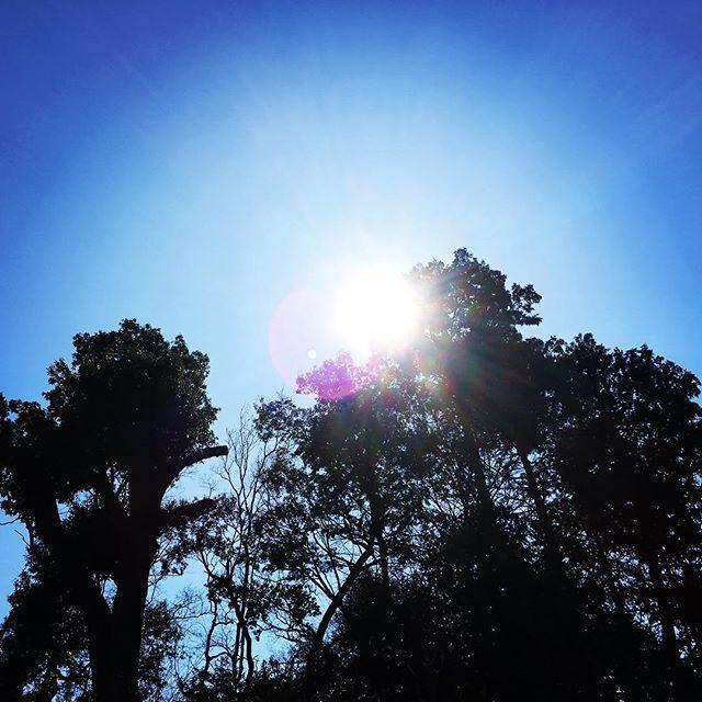 【ぐもにん2343】行きたい場所に誘われる。今日も「笑顔の選択」と。#goodmorning #beautifulsky #bluesky #sunlight #tree