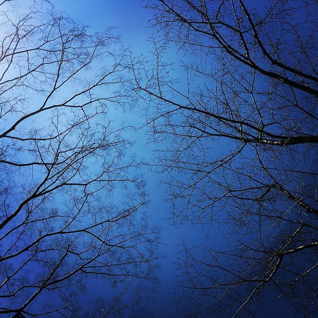 【ぐもにん2342】何をしていても何もしていなくても動いてるから大丈夫。今日も「笑顔の選択」と。#goodmorning #bluesky #beautifulsky #tree #branches