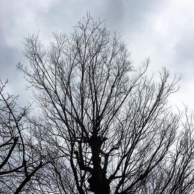 【ぐもにん2335】あなたはあなたのままで大切な世界の一部。今日も「笑顔の選択」と。#goodmorning #beautifulsky #tree #sky