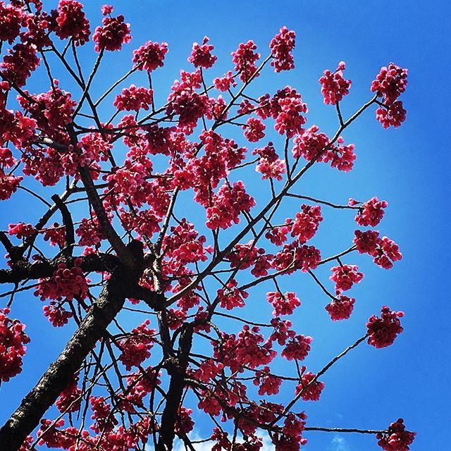 【ぐもにん2338】頭と体と心のバランス。今日も「笑顔の選択」と。#goodmorning #beautifulsky #flowers #pink