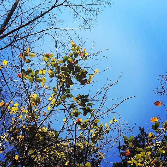 【ぐもにん2339】今、しかない。今日も「笑顔の選択」と。#goodmorning #trees #beautifulsky #skygram #bluesky