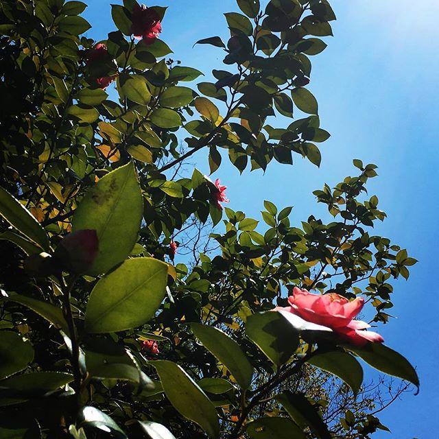 【ぐもにん2337】どう生きるか、選べることを知ることから。今日も「笑顔の選択」と。#goodmorning #beautifulsky #tree #flowers #flowerstagram #bluesky