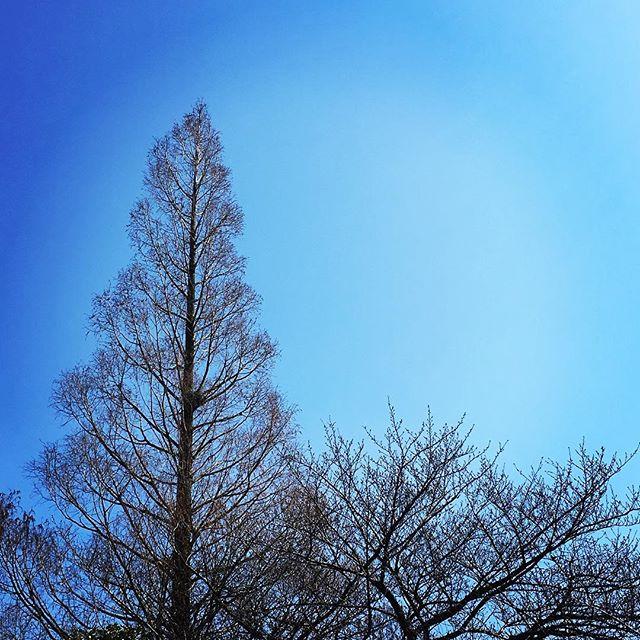 【ぐもにん2346】第六感も能力のうち、自分の一部。今日も「笑顔の選択」と。#goodmorning #bluesky #tree #beautiful #sky