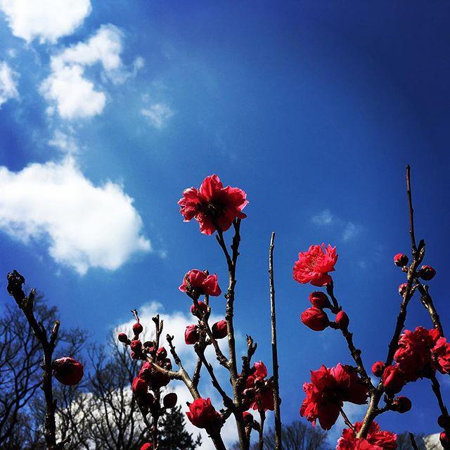 【ぐもにん2354】シンプルに。丁寧に。積み上げる。今日も「笑顔の選択」と。#goodmorning #flower #beautiful #sky #bluesky