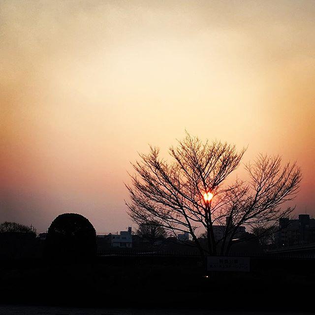 【ぐもにん2340】決めて動く。シンプルに。今日も「笑顔の選択」と。#goodmorning #beautifulsky #sunset #tree