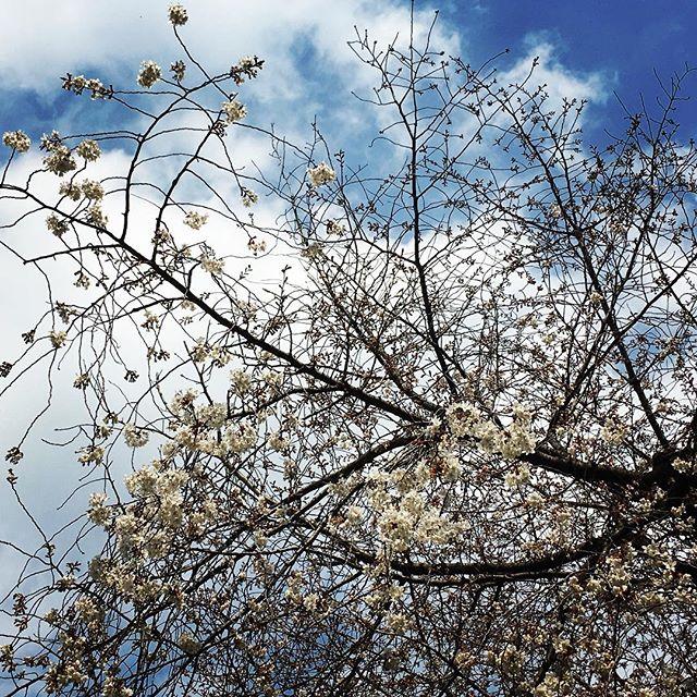 【ぐもにん2349】楽しくがんばれることを。世界は自分がつくりあげている。今日も「笑顔の選択」と。#goodmorning #beautifulsky #beautiful #sky #cherryblossom #sakura