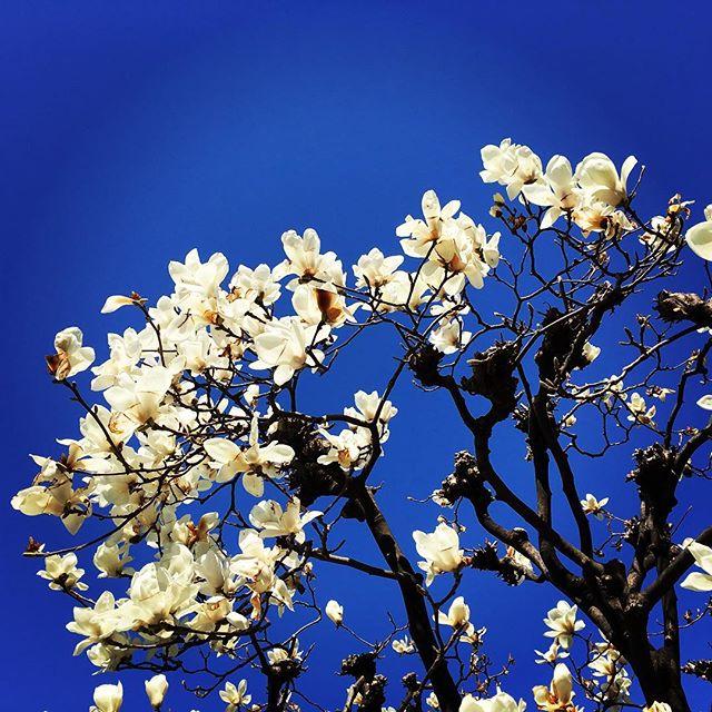 【ぐもにん2344】自分を信じる。世界を信じる。今日も「笑顔の選択」と。#goodmorning #beautifulsky #bluesky #flowers #blue #white