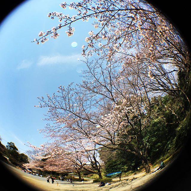 【ぐもにん2358】今だけが貴重。感謝で満たす。今日も「笑顔の選択」と。#goodmorning #flower #sakura #sky #cherryblossom #tree