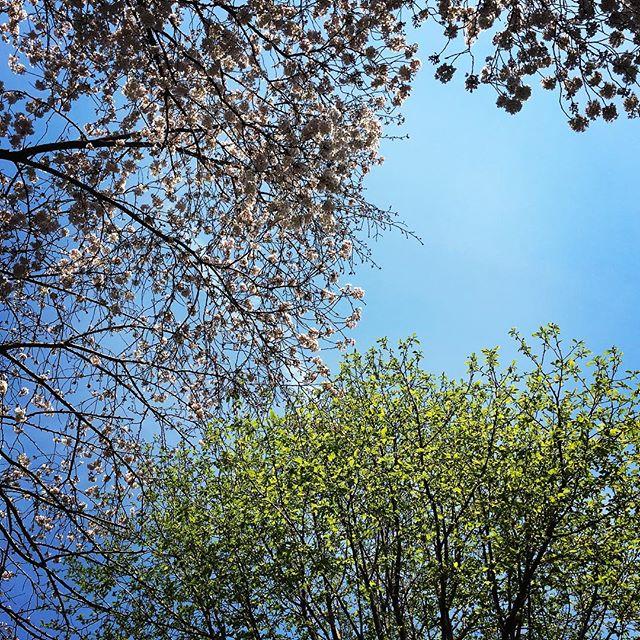 【ぐもにん2356】全てのことは自分の投影、糧になる。今日も「笑顔の選択」と。#goodmorning #beautiful #bluesky #sky #flower #sakura #cherryblossom #tree