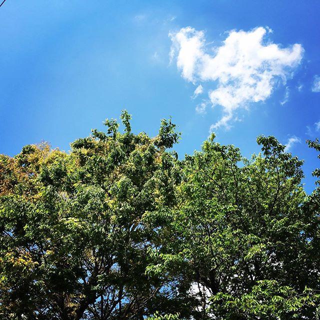【ぐもにん2379】今に幸せを感じられること。今日も「笑顔の選択」と。#goodmorning #bluesky #sky #tree #green