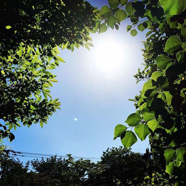 【ぐもにん2385】朗らかに暮らすために今すること。今日も「笑顔の選択」と。#goodmorning #bluesky #sunlight #green #sky