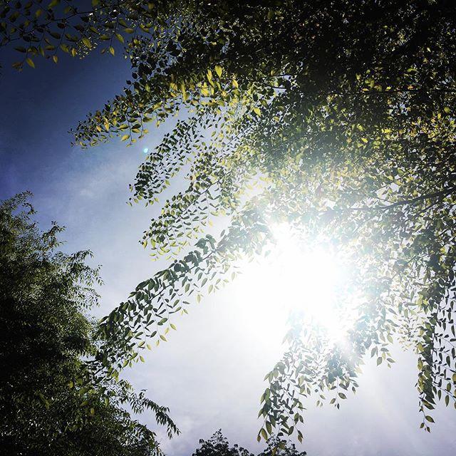 【ぐもにん2383】還り続ける。今日も「笑顔の選択」と。#goodmorning #beautifulsky #leaf #sunlight #sky