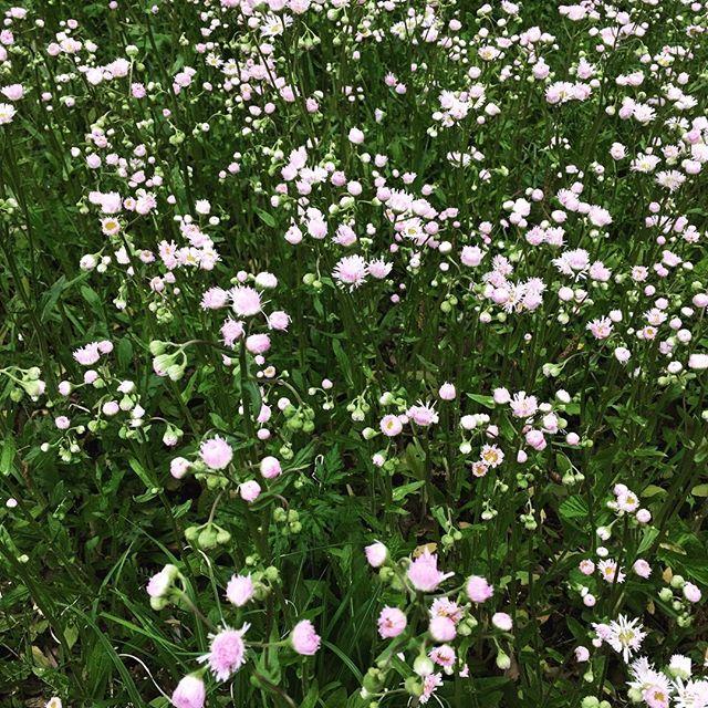 【ぐもにん2389】全ては一つにつながっている。今日も「笑顔の選択」と。#goodmorning #flowers #green #pink