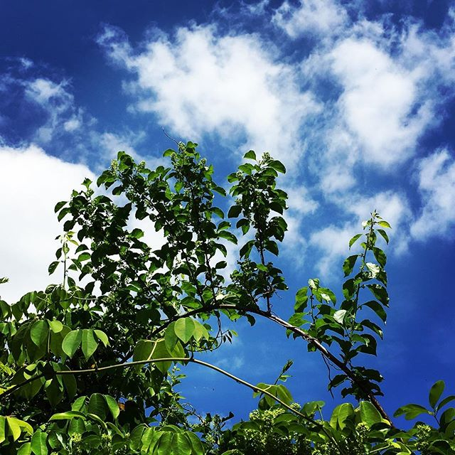 【ぐもにん2394】決めて進む。変えることも戻ることも貫くことも。今日も「笑顔の選択」と。#goodmorning #beautifulsky #bluesky #sky #green #leaf