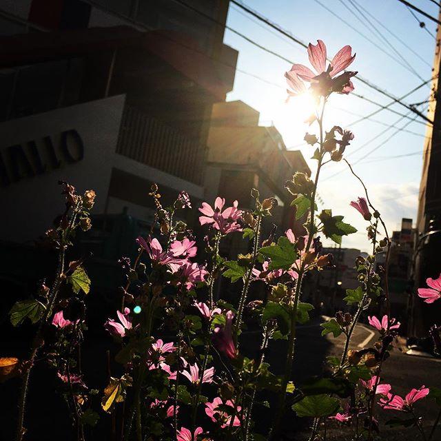 【ぐもにん2399】どこにでもある光に気づく。今日も「笑顔の選択」と。#goodmorning #flowers #sunlight #sky