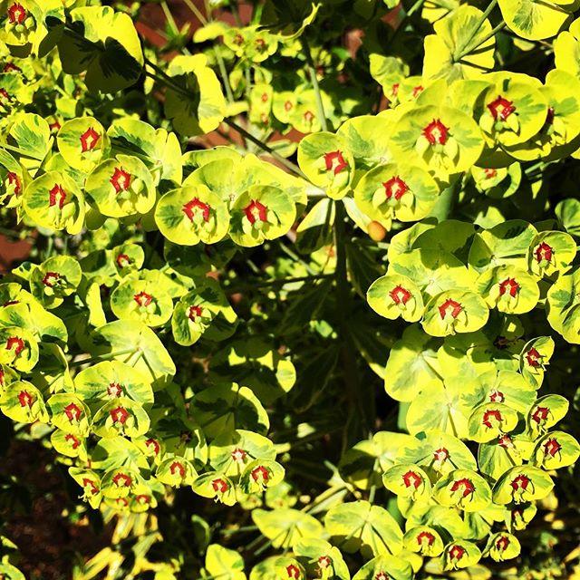 【ぐもにん2398】自分をとことん楽しみ極める。今日も「笑顔の選択」と。#goodmorning #green #nature #leaf
