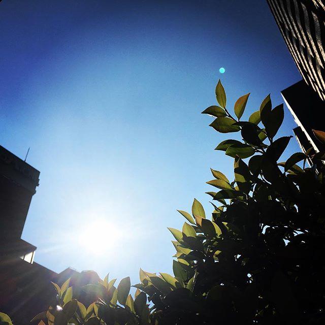 【ぐもにん2406】今の全てに感謝する。今日も「笑顔の選択」と。#goodmorning #sky #sunlight #blue #beautifulsky #beautiful