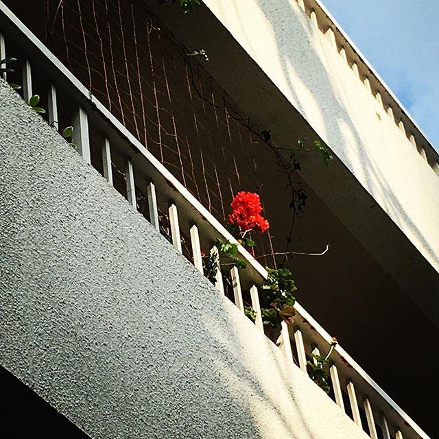 【ぐもにん2408】自然の自分、なんでも知ってるなんでもできる。今日も「笑顔の選択」と。#goodmorning #flower #red