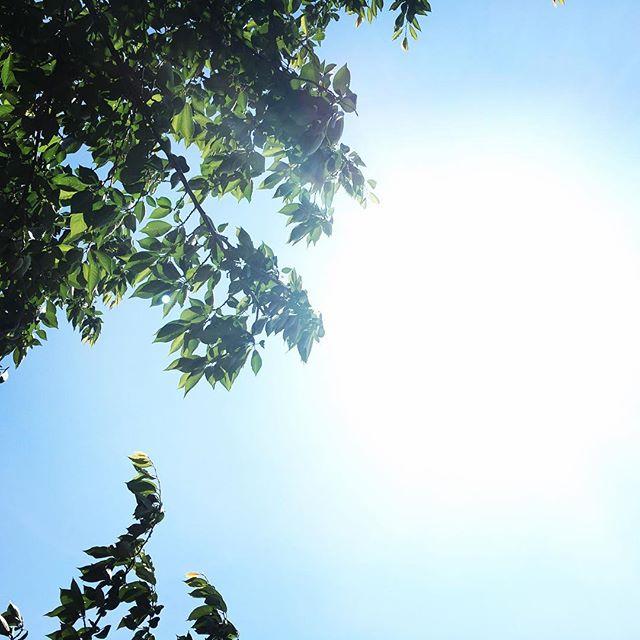 【ぐもにん2415】自分のバランスを試しながら見つけていく。今日も「笑顔の選択」と。#goodmorning #green #sunlight #sky #beautiful
