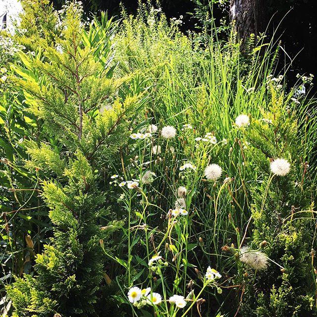 【ぐもにん2419】全ては自分から。今日も「笑顔の選択」と。#goodmorning #green #nature #puffball