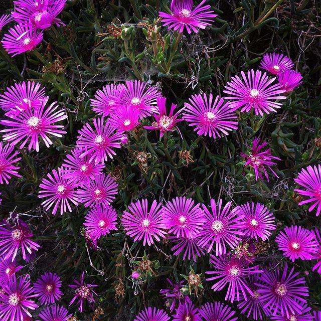【ぐもにん2420】自分を引き受ける。今日も「笑顔の選択」と。#goodmorning #flower #pink #nature