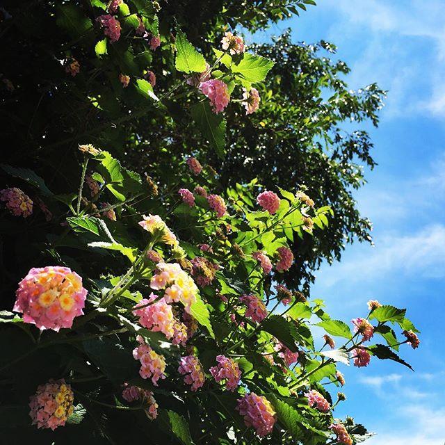 【ぐもにん2426】明るく楽しくおもしろく。今日も「笑顔の選択」と。#goodmorning #sky #green #flower #flowers #pink