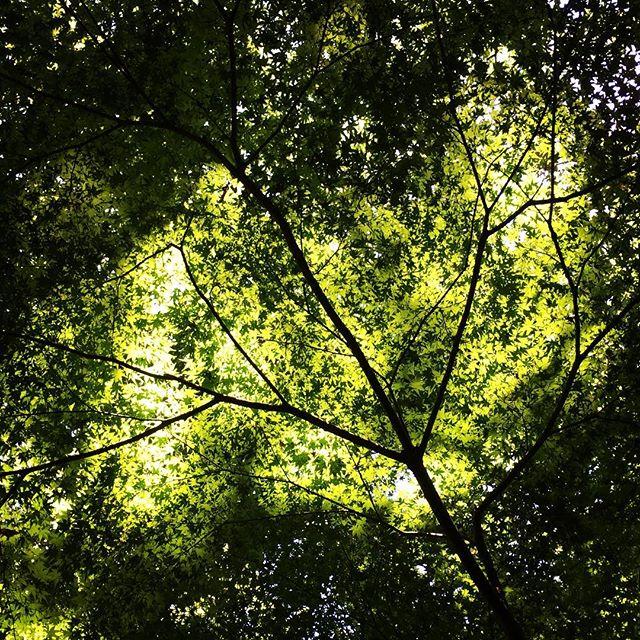 【ぐもにん2428】気分を作るのは自分。今日も「笑顔の選択」と。#goodmorning #green #light