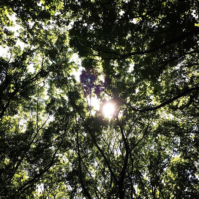 【ぐもにん2434】すべては一つ。今日も「笑顔の選択」と。#goodmorning #green #sunlight #sun