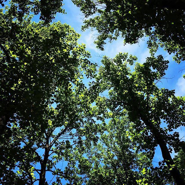 【ぐもにん2445】ただ感じることに本当がある。今日も「笑顔の選択」と。#goodmorning #green #sky #trees