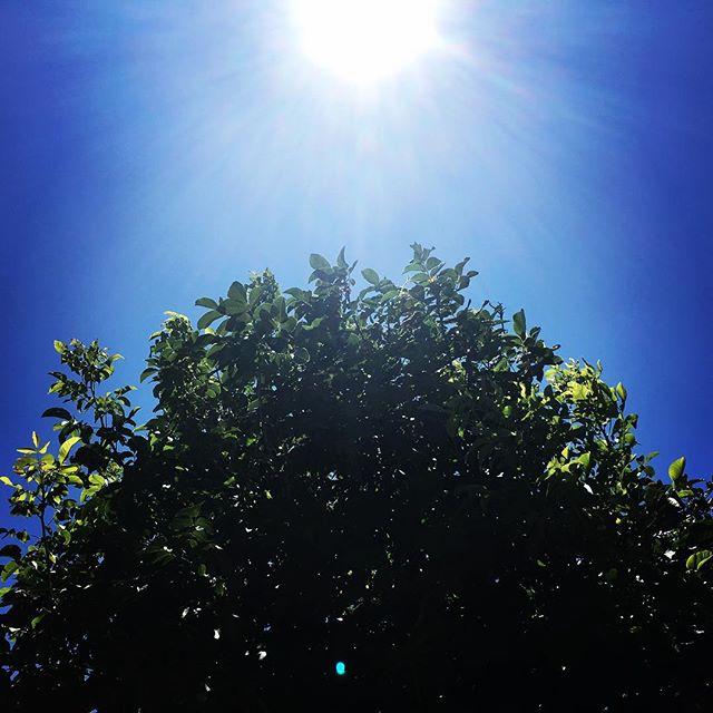 【ぐもにん2457】毎日がヒントと幸せで溢れている。今日も「笑顔の選択」と。#goodmorning #bluesky #sunlight #green #blue #sun #sky