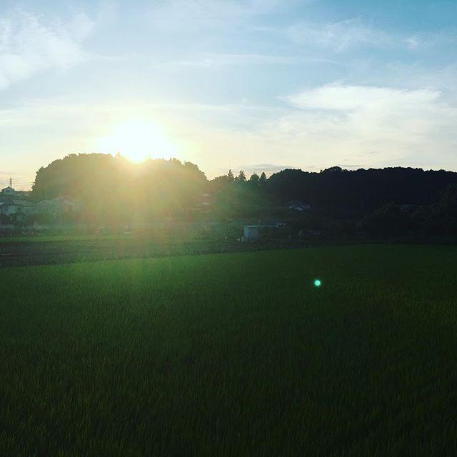 【ぐもにん2453】恵まれていることを全身で感じる。今日も「笑顔の選択」と。#goodmorning #bluesky #blue #sunset #sun #green #ricefield