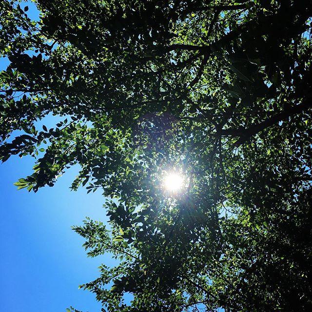 【ぐもにん2460】柔らかくのびのびとした自分を選ぶ。今日も「笑顔の選択」と。#goodmorning #green #bluesky #blue #sky #beautiful #sunlight