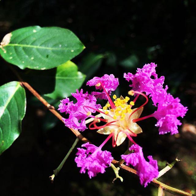 【ぐもにん2517】なんにもない自分を引き受け慈しみ味わい尽くす。今日も「笑顔の選択」と。#goodmorning #flowers #pink #yellow #green #おはよう