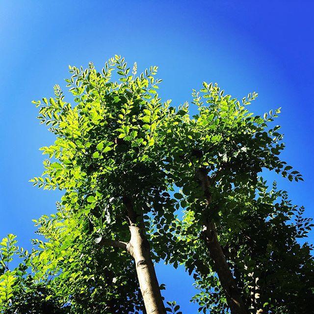 【ぐもにん2560】出来事に意味付けしているのは自分。今日も「笑顔の選択」と。#goodmorning #bluesky #beautifulsky #blue #beautiful #sky #green #おはよう