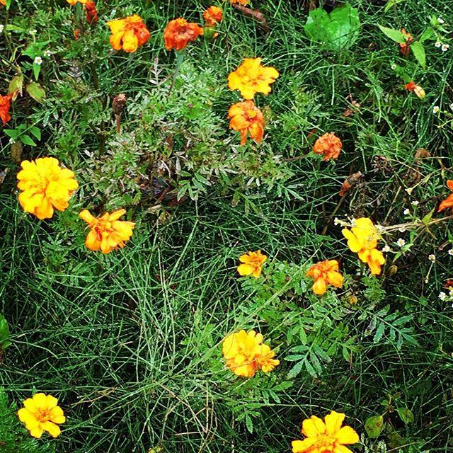 【ぐもにん2563】心が喜ぶサインを知る。今日も「笑顔の選択」と。#goodmorning #flowers #green #rainyday #おはよう